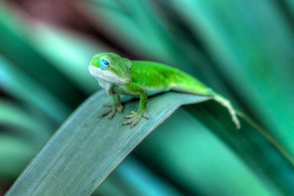 Photograph My Green Friend by Nerces Mavelian on 500px