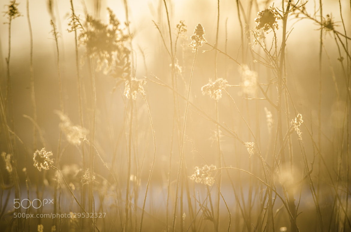 Photograph Filtered Light by Rusty Parkhurst on 500px