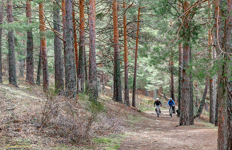 Photograph Ciclistas en el bosque by Eduardo Menendez on 500px