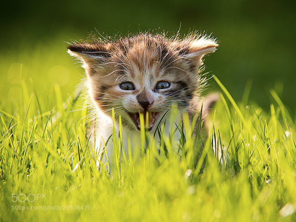 Photograph Miau by Bernhard Klestil on 500px
