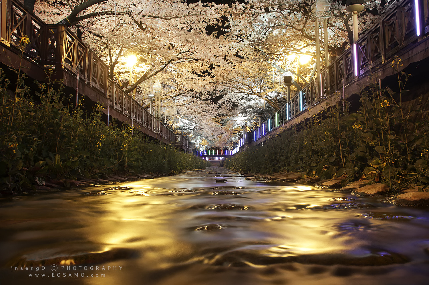 Photograph cherry blossom road by chan-wook Kim on 500px