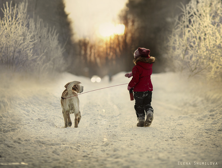 Photograph Last winter walk... by Elena Shumilova on 500px