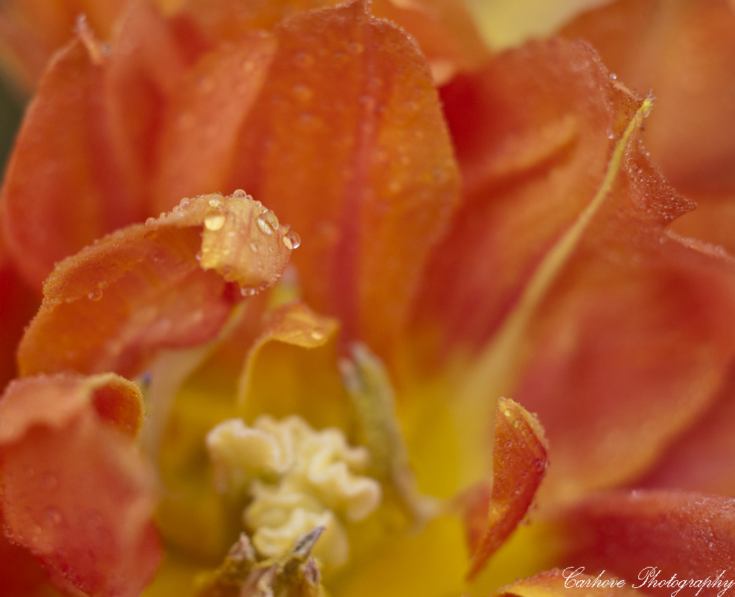 Photograph Drops by Carlos  on 500px