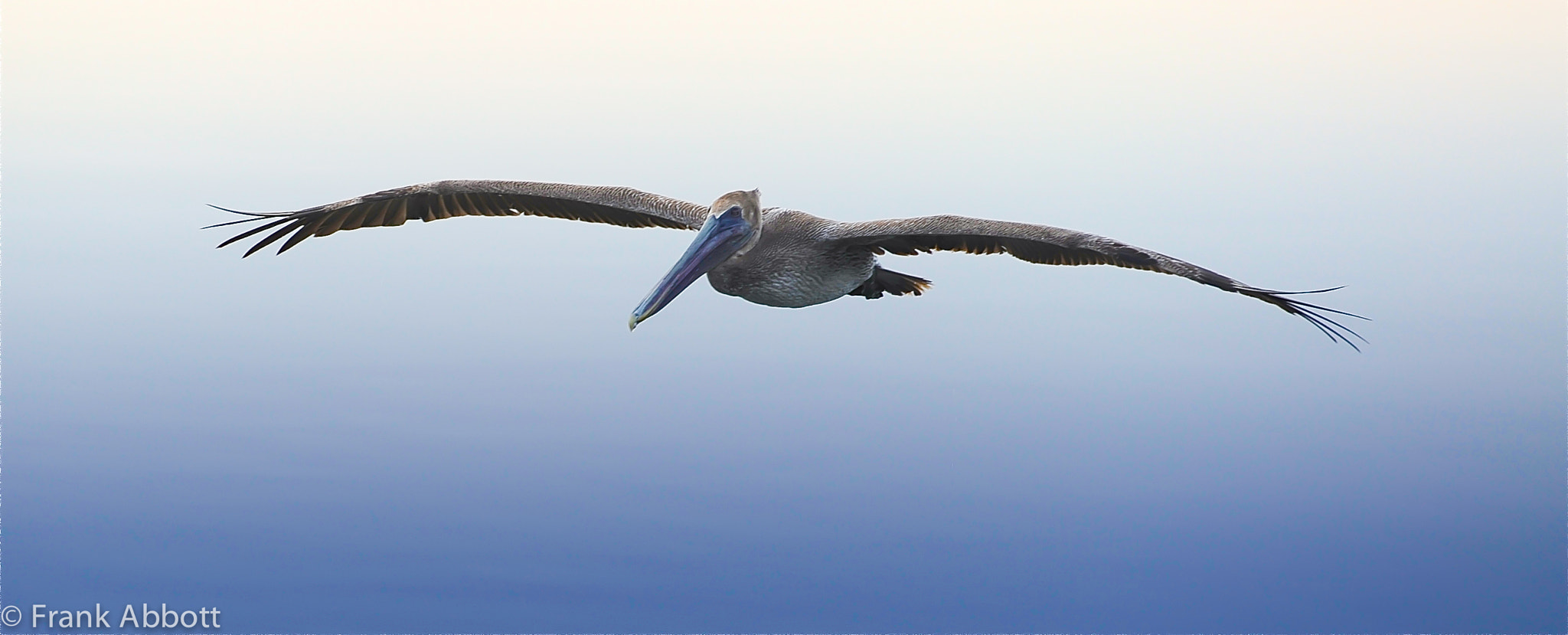 Photograph Gliding by Franklin Abbott on 500px