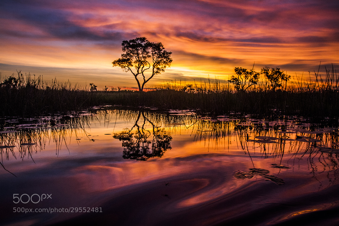 Photograph Okavango Delta by K. Chae on 500px