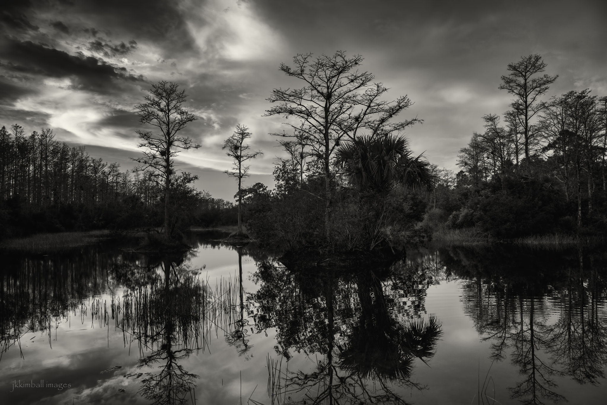 Photograph Ghosts of The Everglades by John Kimball on 500px