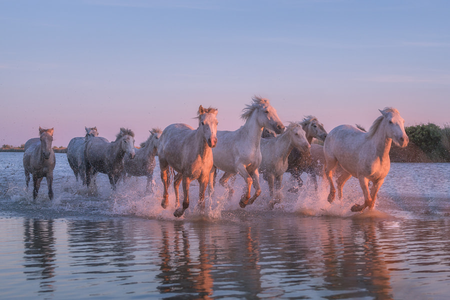 Running with the Horses by Iurie Belegurschi on 500px.com