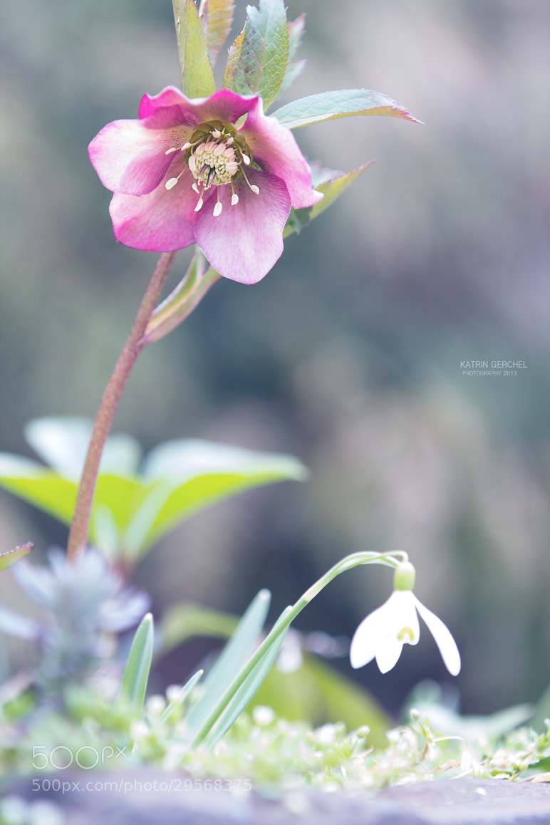 Photograph Spring by Katrin Gerchel on 500px