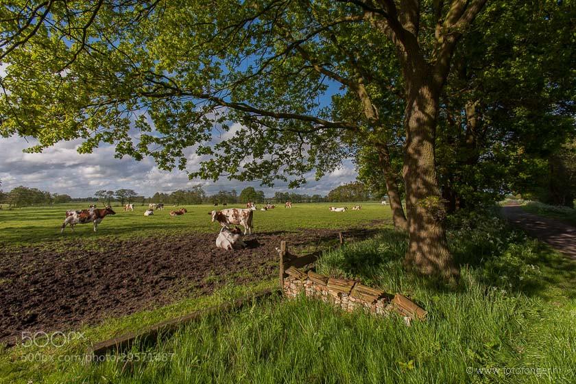 Photograph iestwei by Fonger de Vlas on 500px