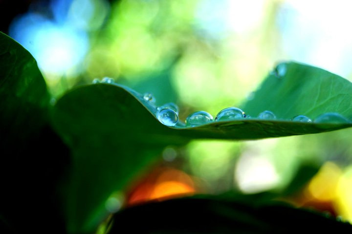Photograph morning_dew by monique Arcuna on 500px
