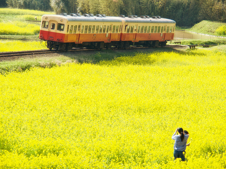 Shooting a Train in the Yellow World by Alan Drake Haller on 500px.com