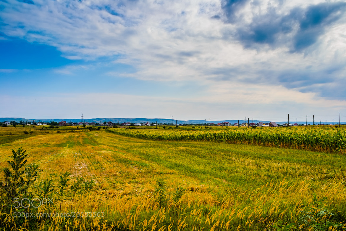 Photograph Field of golds by Catalin Dima on 500px
