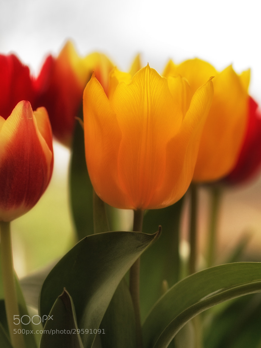 Photograph same flower two camera's by Mike Griggs on 500px