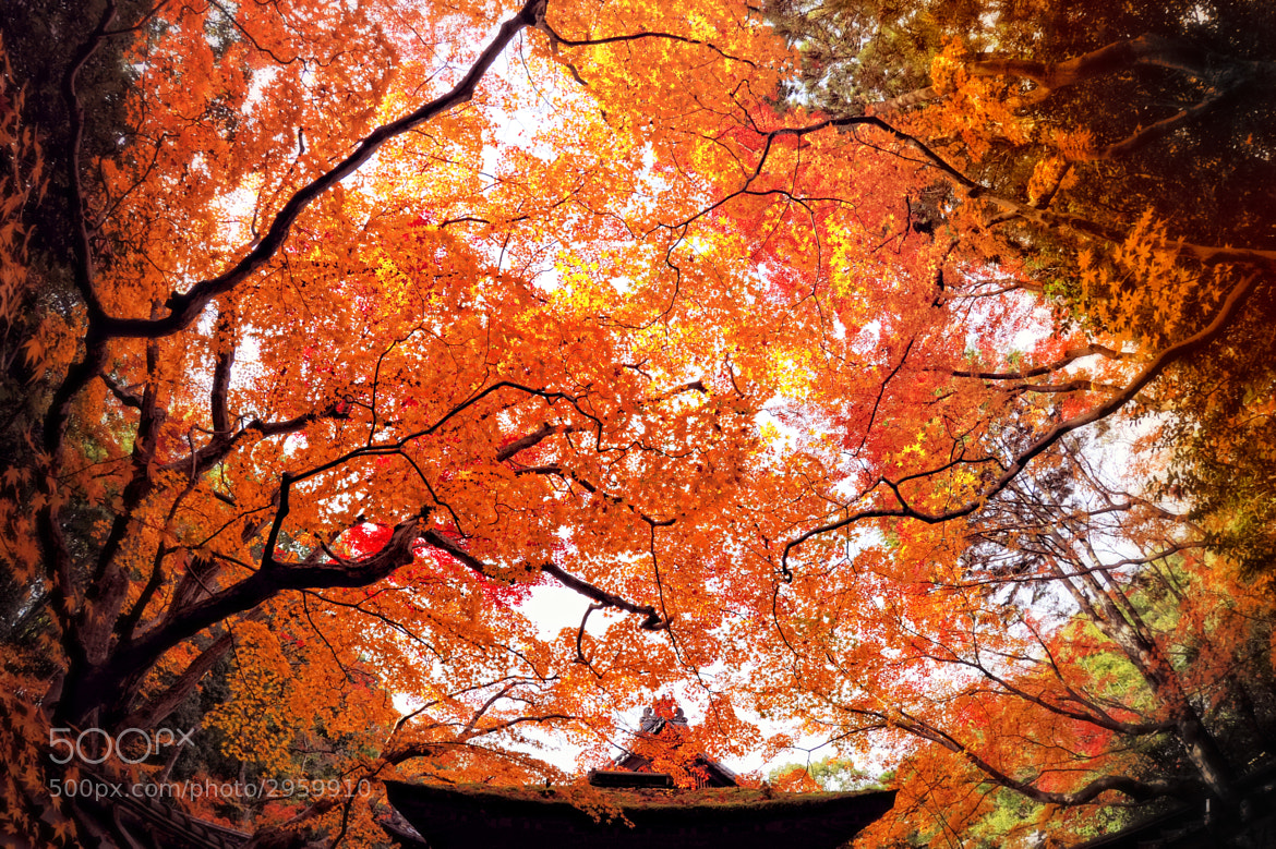 Photograph Autumn starlit sky by y2- hiro on 500px