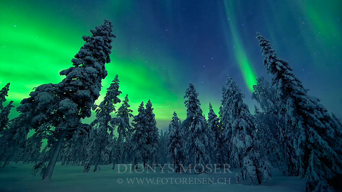 Photograph behind trees by Dionys Moser on 500px