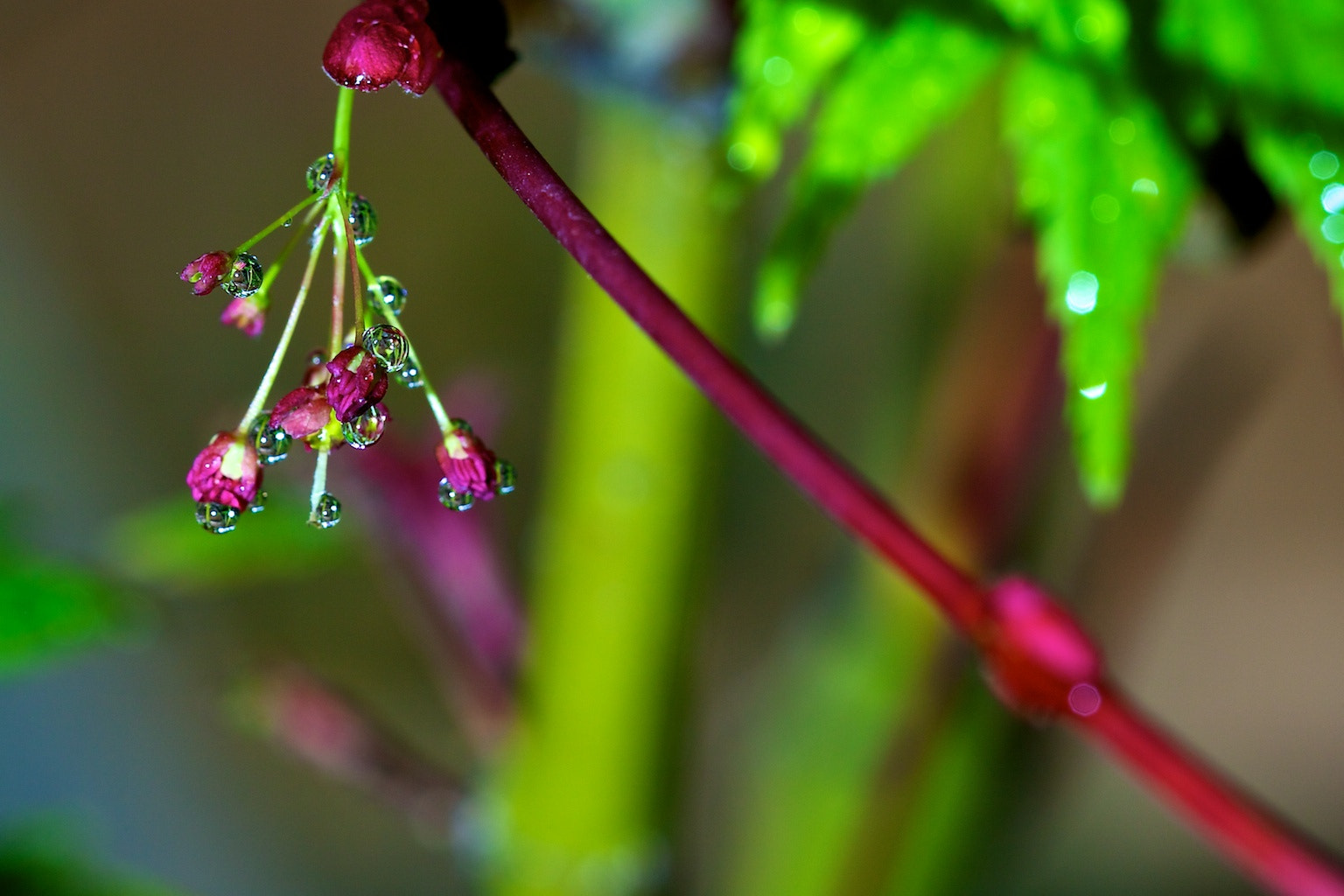 Photograph Dangling Dew by Earl Bones on 500px