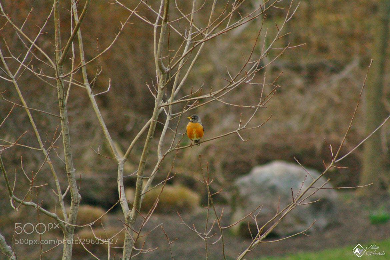 Photograph Tweet.. Tweet.. by Aditya Vistarakula on 500px
