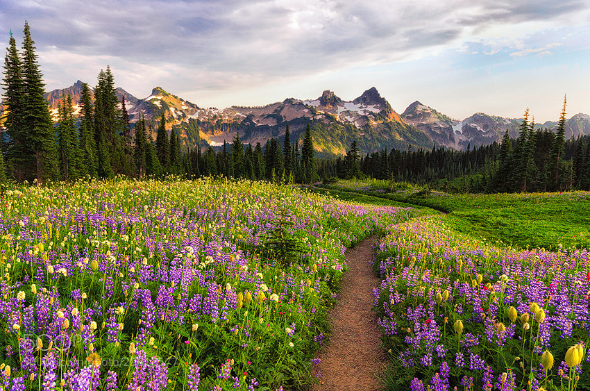 Photograph Path of flowers by Saravana  R on 500px