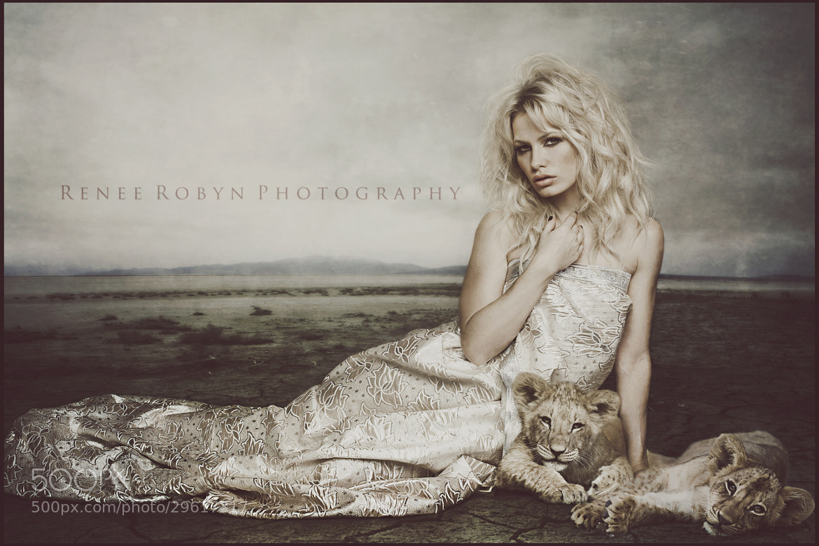 Photograph Lioness by Renee Robyn on 500px