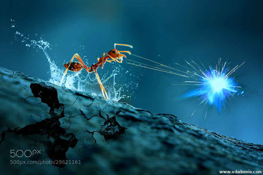 Photograph Magic Ant by Uda Dennie on 500px