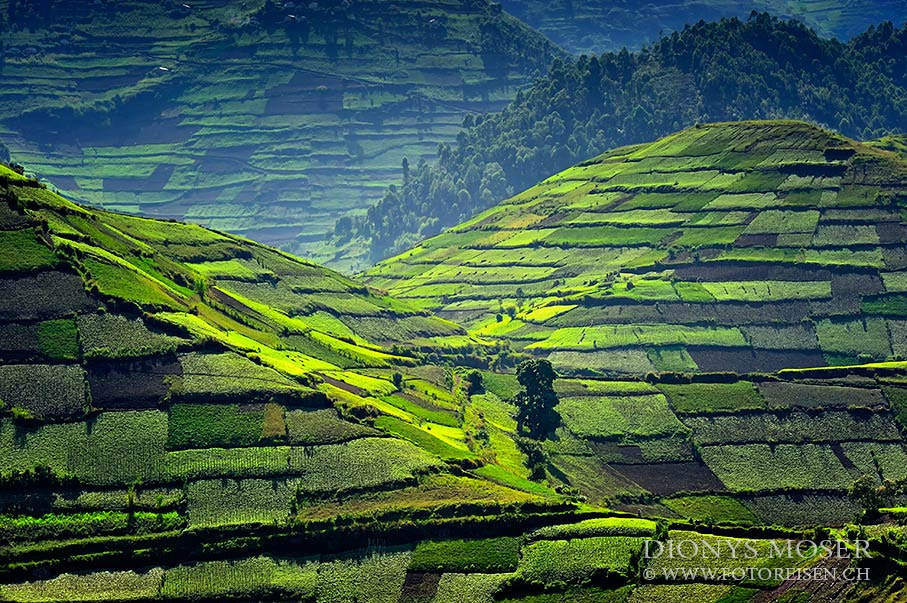 Photograph fields in green by Dionys Moser on 500px