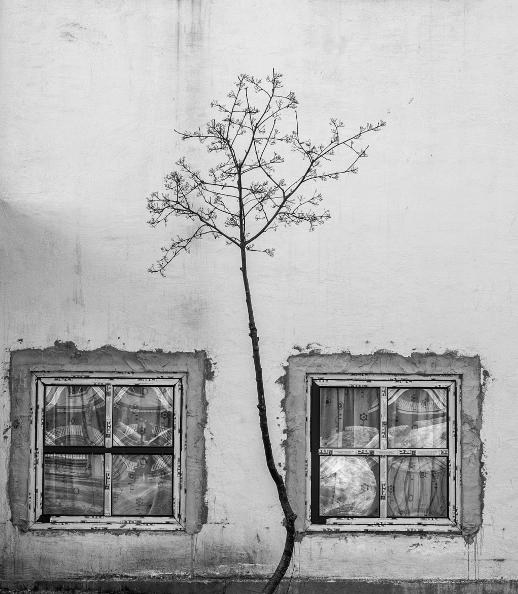 Photograph Tree and Windows by Kolbein Svensson on 500px