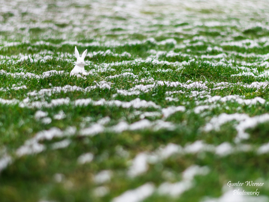 Photograph bunny in snow by Gunter Werner on 500px