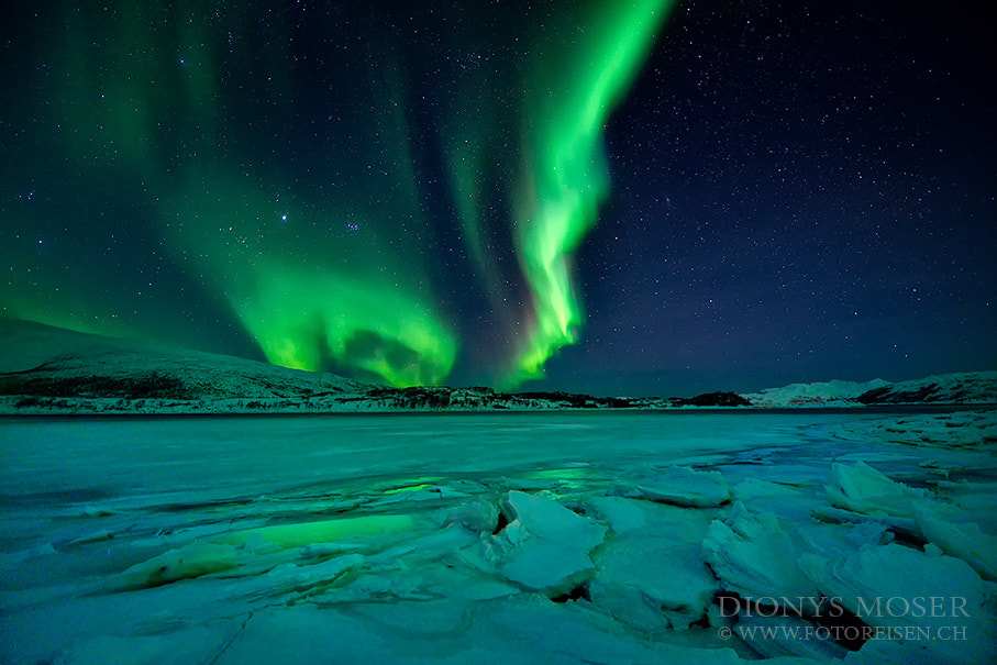Photograph green frozen by Dionys Moser on 500px