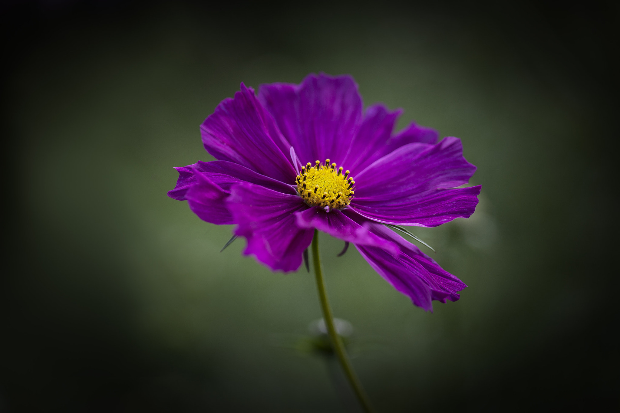 Photograph Cosmos 2 by Margaret Morgan on 500px