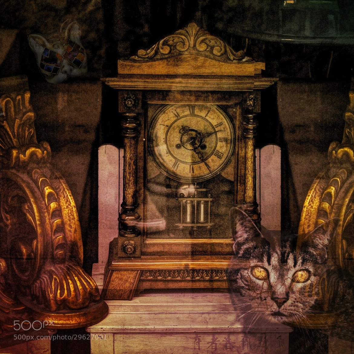 Photograph Cat time by Gustimbaldo Del Piero on 500px