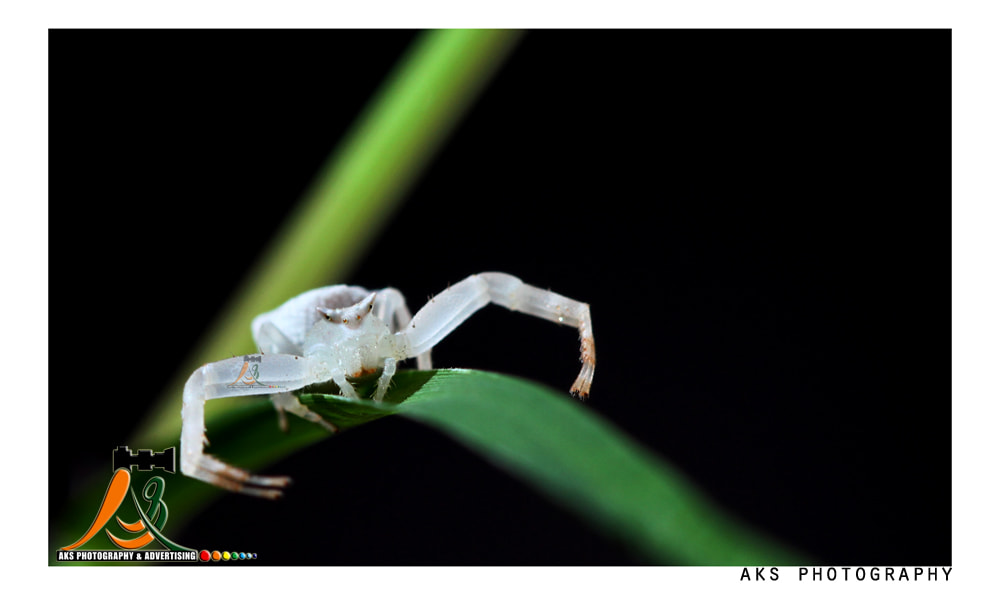 Photograph The Ceab Spider by Ajay Sharma on 500px