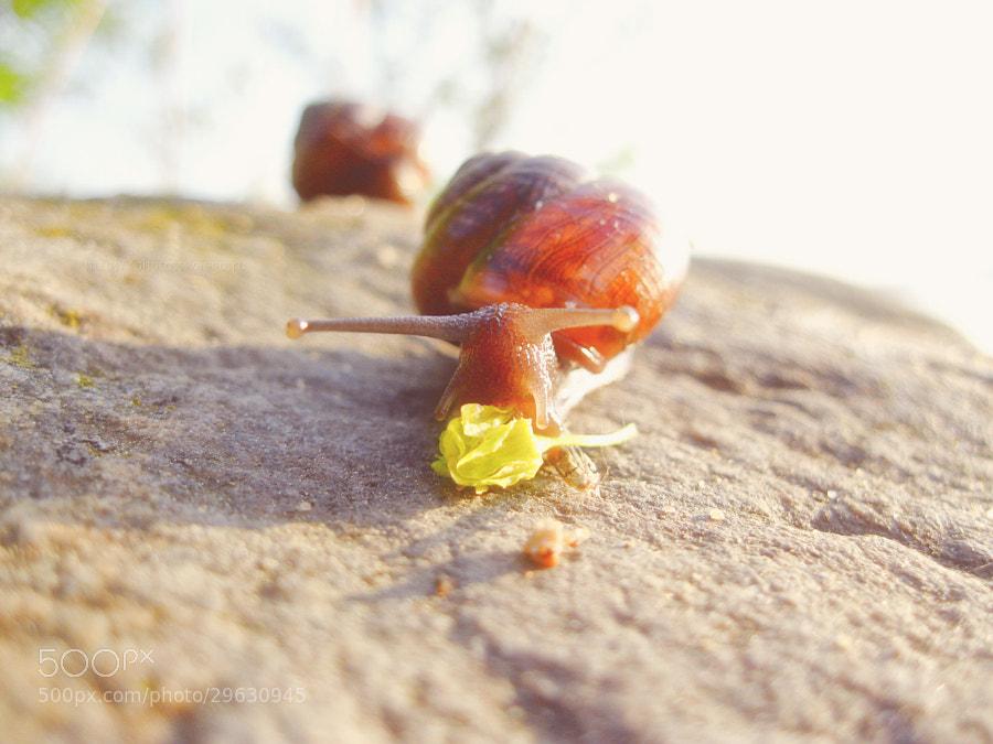adventure snail by Tolik Maltsev on 500px.com