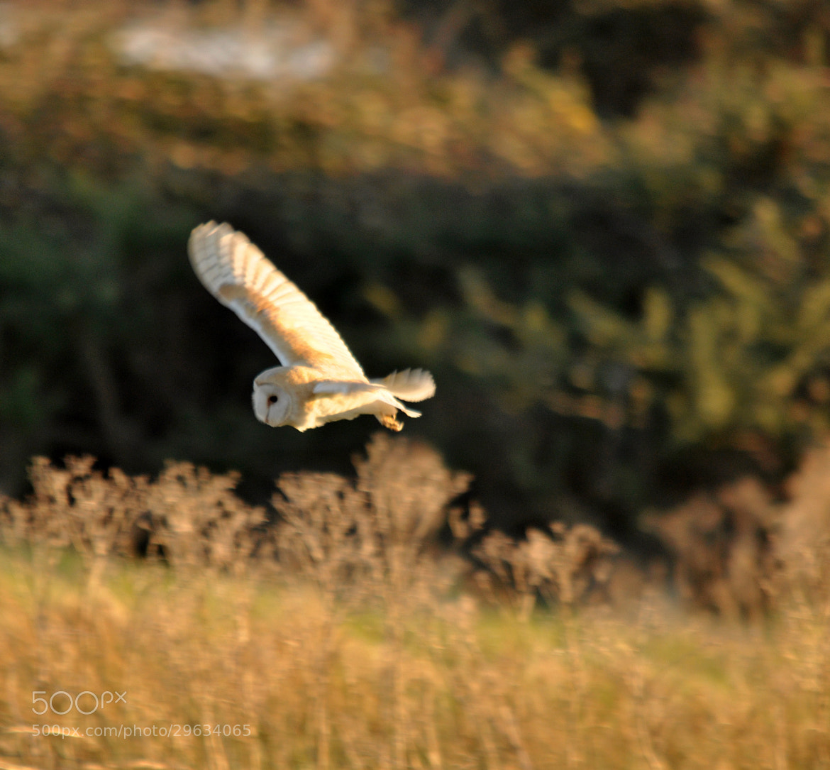 Photograph Another Barn Owl. by Graham Turner on 500px