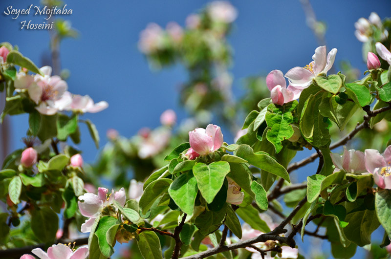 Photograph ~Blossoms~ by seranza on 500px