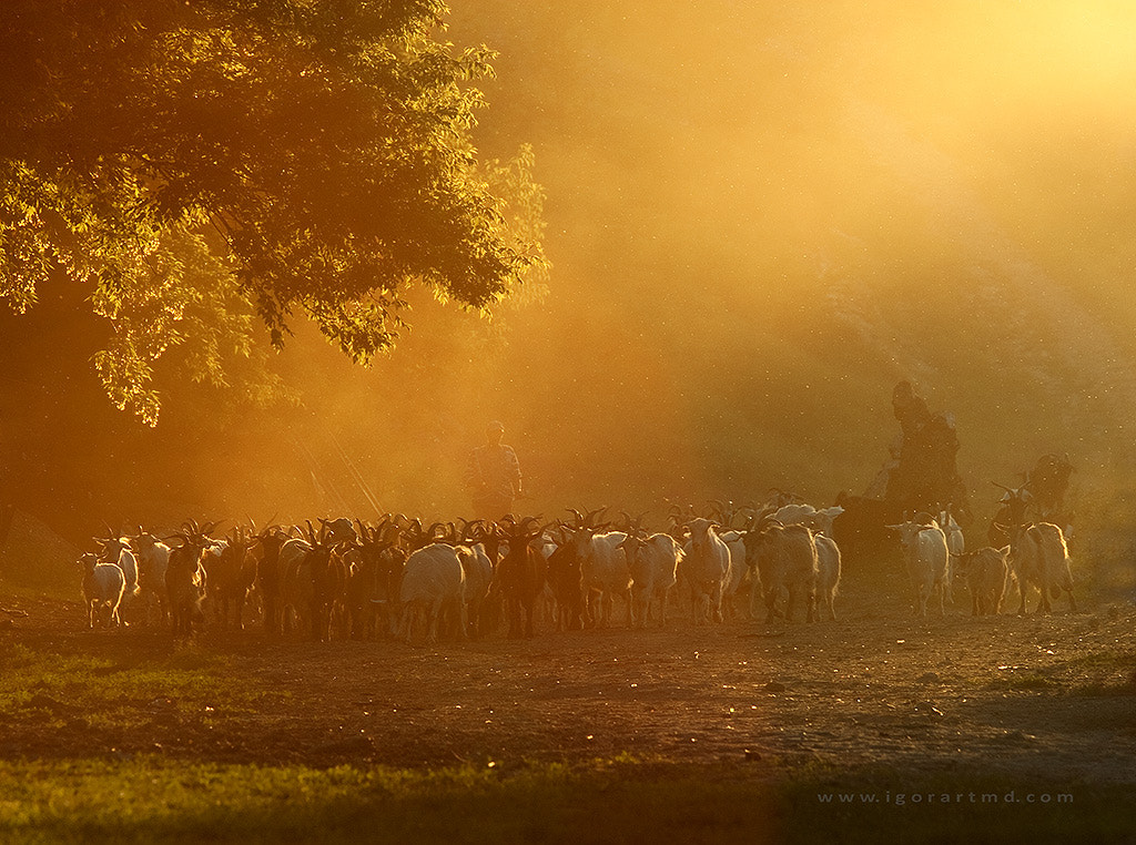 Photograph pastorall by Igor Sirbu on 500px