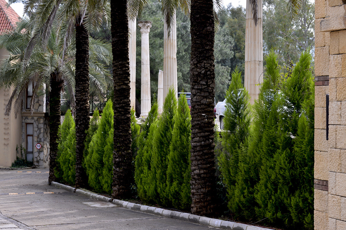 Photograph Palm Trees and Antique Pillars by Korhan Karagulle on 500px