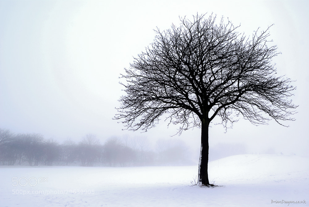 Photograph Snowy Tree by Brian Deegan on 500px