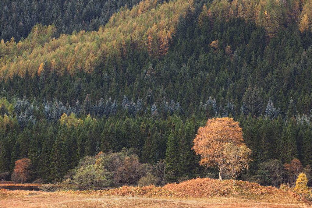 Photograph Autumn in Scotland by Sean Foo on 500px
