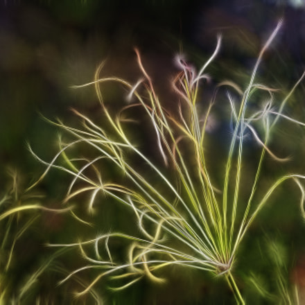 Lightning grass