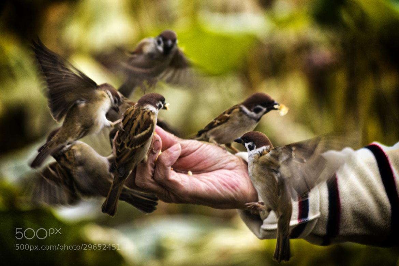 Photograph Feeding birds by Diego Cambiaso on 500px