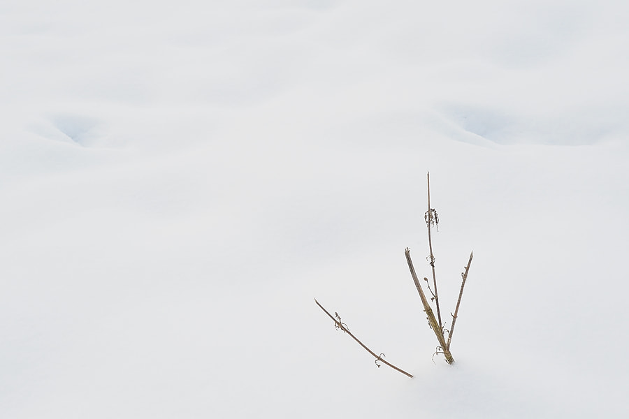 Photograph Winter Minimalism by Jimmy De Taeye on 500px