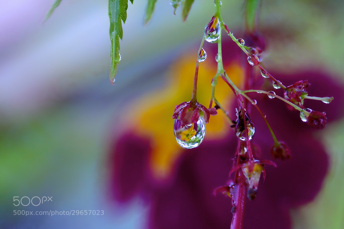 Photograph Crystal Reflection Dew by Earl Bones on 500px