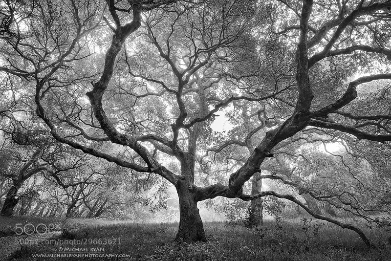 Photograph w i c k e d by Michael Ryan on 500px
