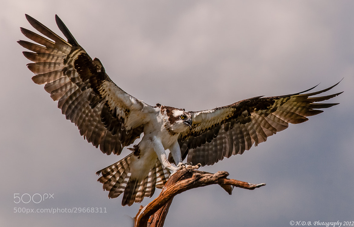 Photograph Wings by Harold Begun on 500px