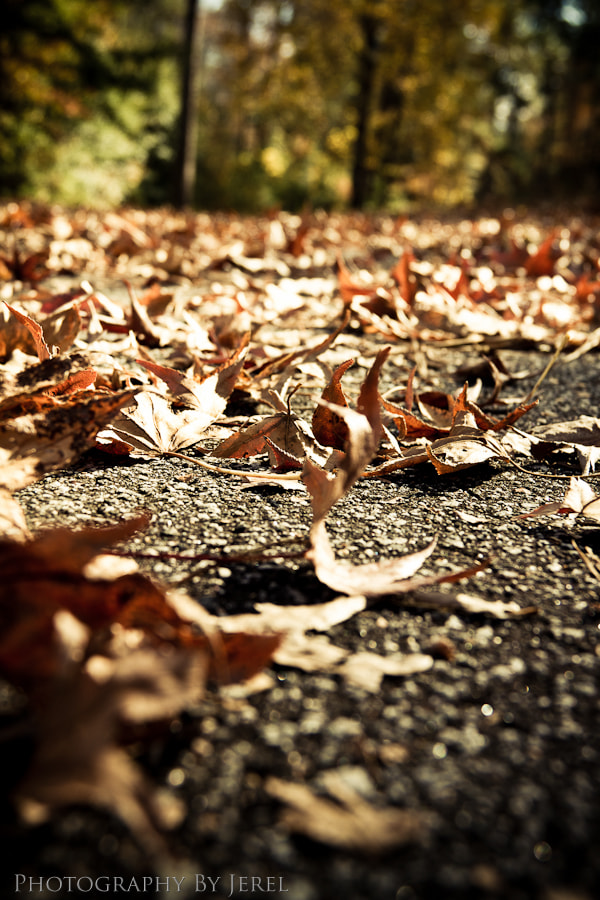 Photograph Fall by J Coles on 500px
