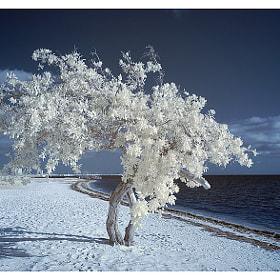 ~By the sea~ by Aelita  International (Aelita) on 500px.com