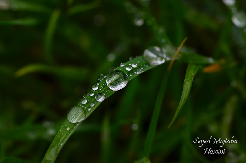 Photograph ~Rainy Shot~ by sero  on 500px