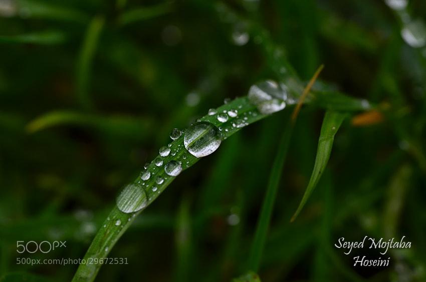 Photograph ~Rainy Shot~ by S'Mojtaba Hosseini on 500px