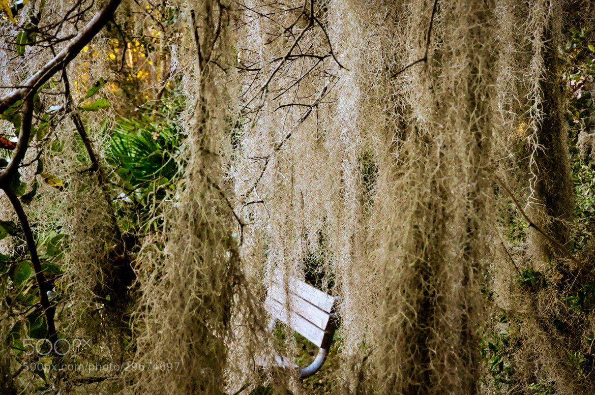 Photograph Old Bench by Dragan Stanisic on 500px