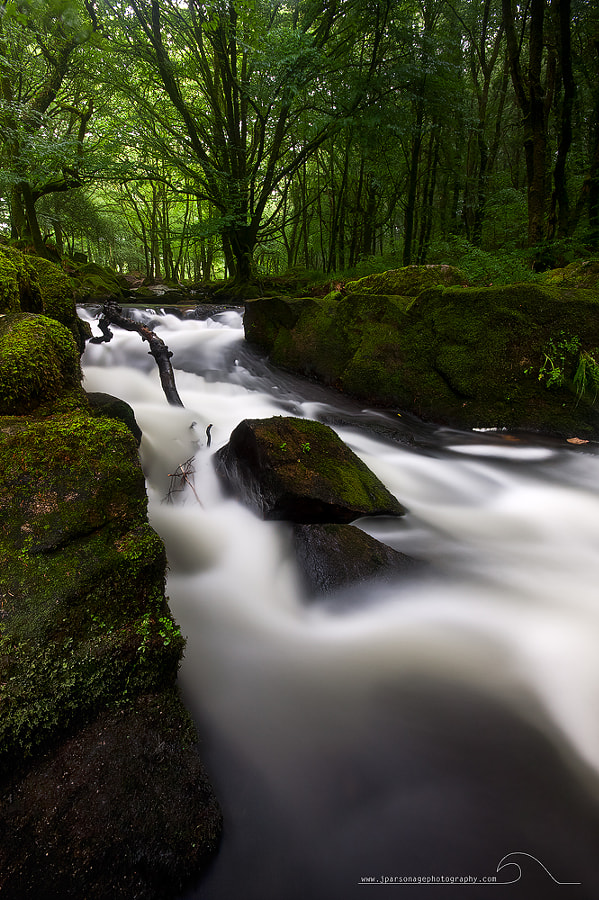 an image taken back in spring at Golitha Falls in Cornwall.
